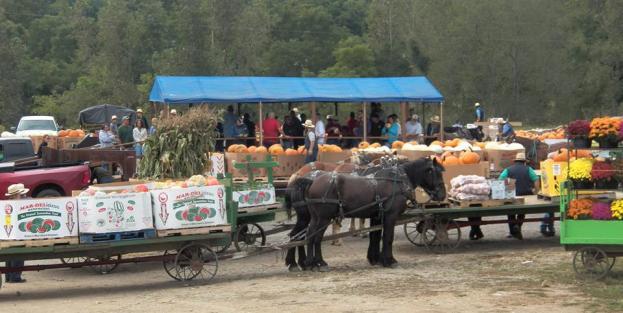 produce auction