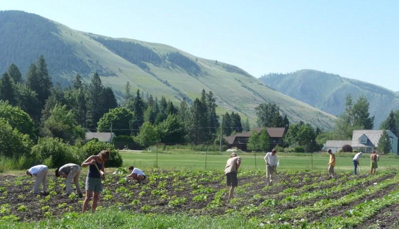 Jack Garden City Harvest